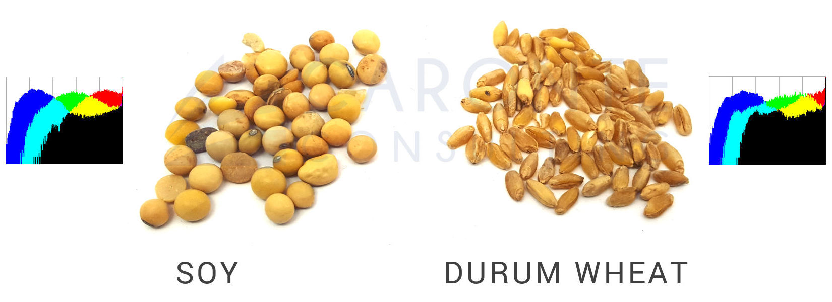 Artificial Vision - Soy and durum wheat